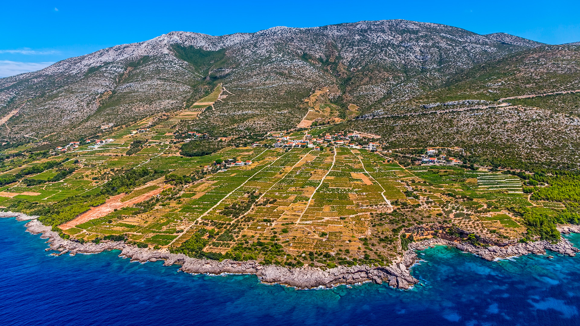 Vineyards of Plavac Mali, the peninsula Pelješac, Croatia